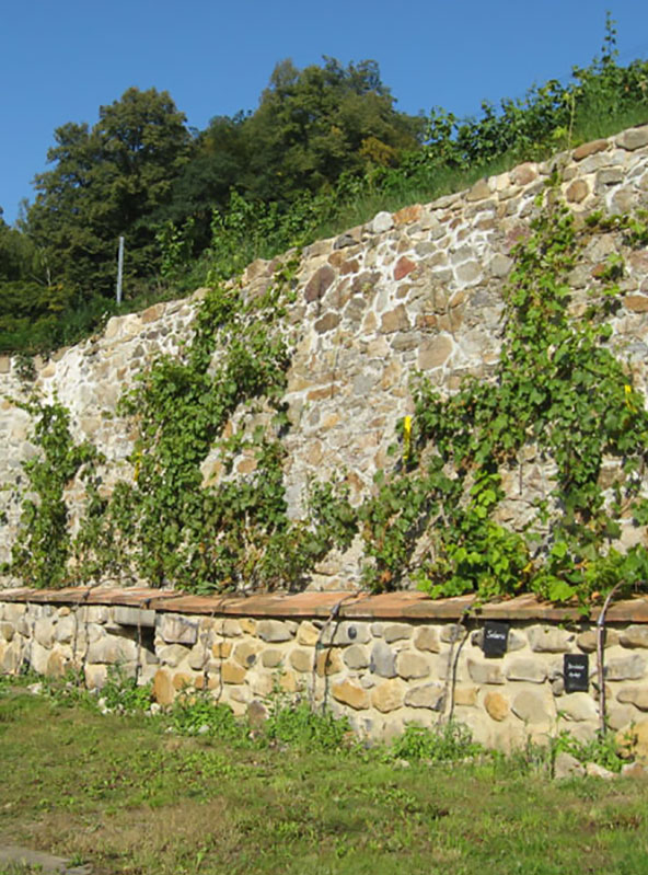Mauer am Weinberg